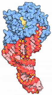 Elongación en la síntesis de proteínas