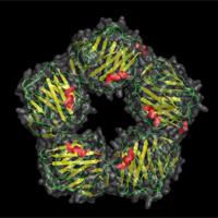 Proteína C reactiva