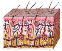 Proteina que relaciona la diabetes y el eczema