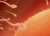 Proteína asociada a la fertilidad