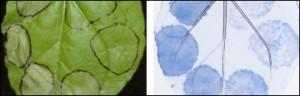 Proteínas y sistema inmunológico