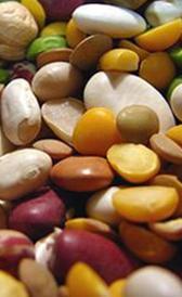 Alimentos con proteinas para veganos