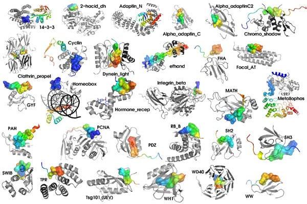 Varios tipos de moléculas que son proteínas