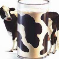 Las proteínas de la leche dependen del tipo de vaca